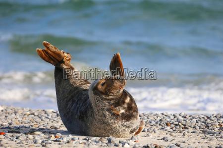 foca natura germania