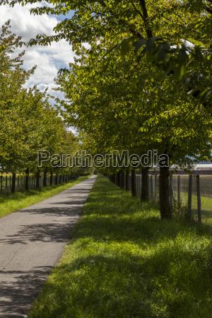 guidare foglia viaggiare albero alberi orizzonte