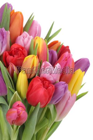 fiore fiori primavera tulipani mazzo bouquet