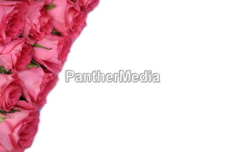 regalo di rose per il giorno