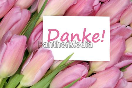 fiore pianta fiori tulipani impianto tulipano