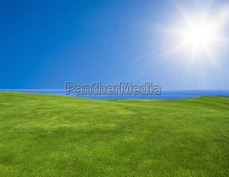 bellissimo paesaggio verde