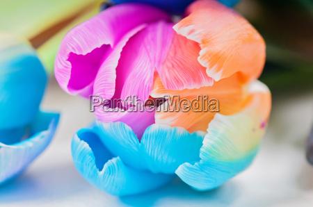 colorato fiore impianto tulipano insolito arcobaleno