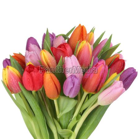 bouquet di fiori di tulipani in