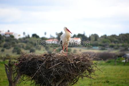 cicogne in nest spagna
