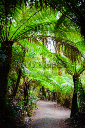 maits rest rainforest trail on great
