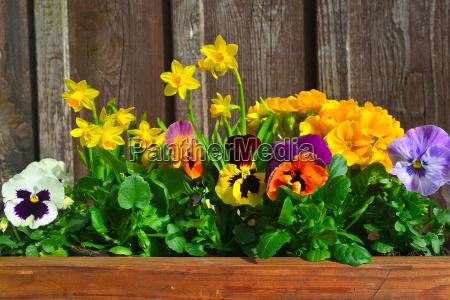 luce tempo libero giardino piantare seminare