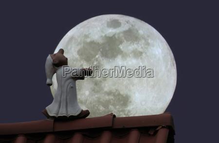 lunar caminante dormido en el tejado