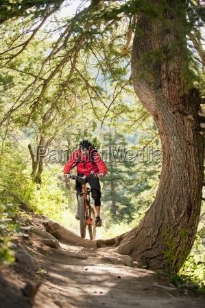 sport dello sport albero stati uniti
