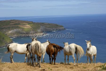 mammifero animali campo europa cavallo cavalli