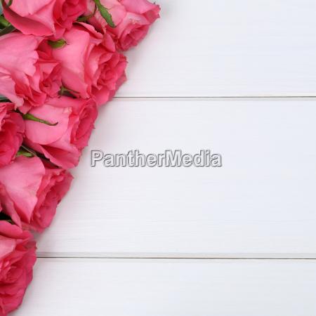 bello bella fiore pianta rosa romantico