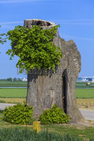 albero foglie orticoltura tronco ceppo formato