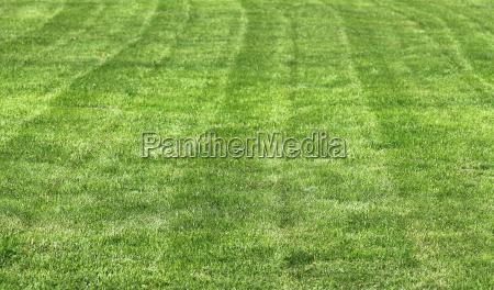 campo modello cartamodello prato erba fondale
