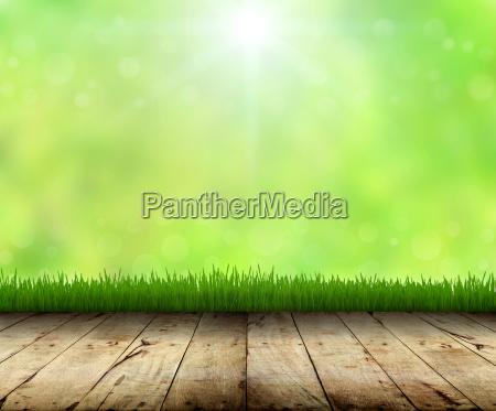 foglia paesaggio natura prato erba naturale