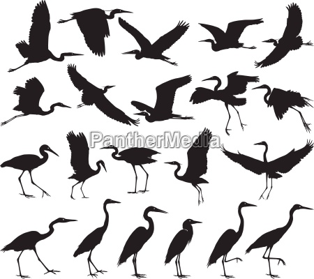 uccello aironi