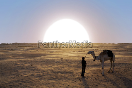 deserto tramonto africa cammello tunisia dromedario