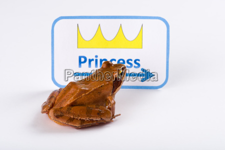 segnale storia rana principessa storiella racconto