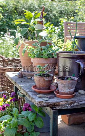 giardino legno foglie estate giardinaggio menta