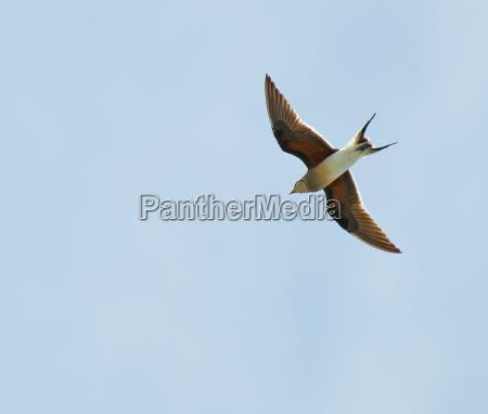uccello selvaggio grecia estate allevamento natura