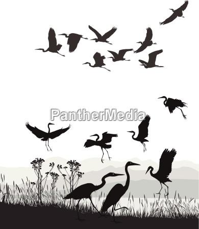 animali uccelli allaperto vettore sagome bianco