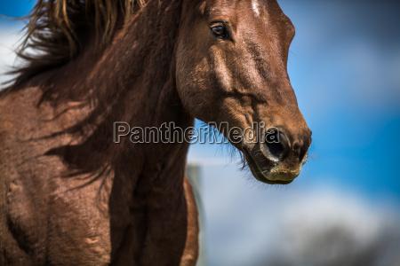 bella testa di cavallo close up