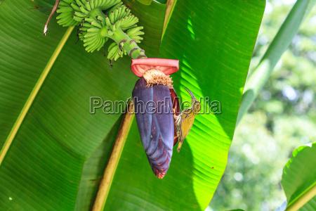uccello fiore pianta ragno banana banconote
