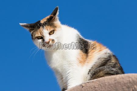sedersi gatto gatta