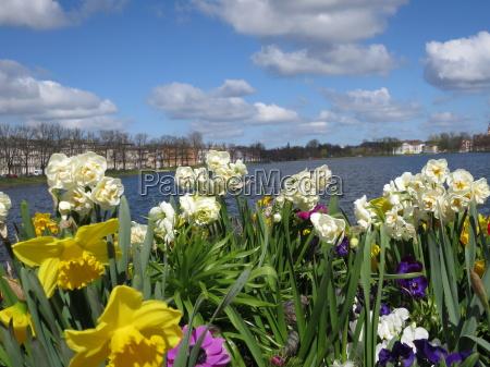 fiore fiori primavera mecklenburg acqua dolce