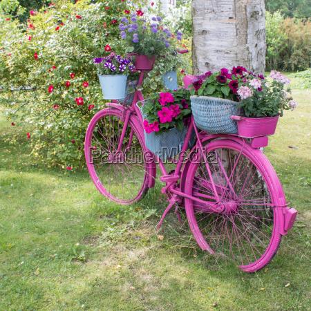 albero giardino ruota fiore pianta fiori