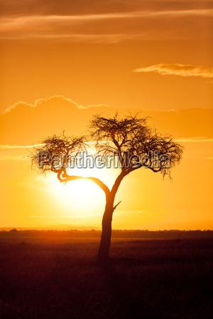 orizzonte tramonto africa kenia crepuscolo natura