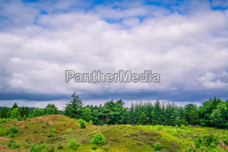 blu albero alberi collina orizzonte parco
