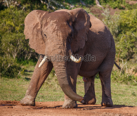 gambe viaggio viaggiare enorme colore animale
