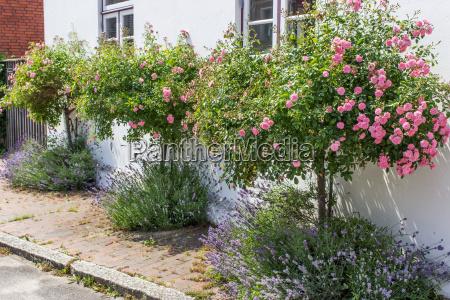 casa costruzione giardino finestra fioritura fiorire