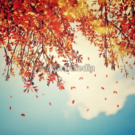 bella annata autunno sfondo