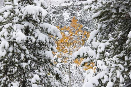 primo piano close up albero stati