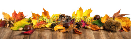 autumn leaves on wood extra wide