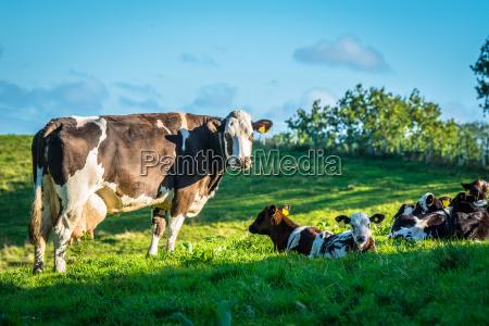 blu agricolo ambiente animale mammifero marrone