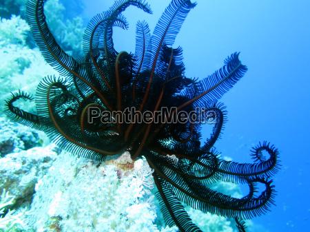 animale egitto barriera corallina scogliera acqua