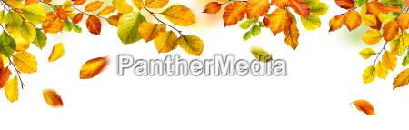 foglie autunnale bordatura fondale di fondo