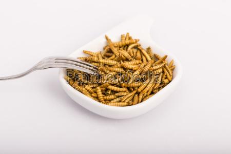 cibo salute primo piano animale insetto