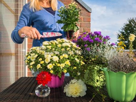 woman planting fall flowers