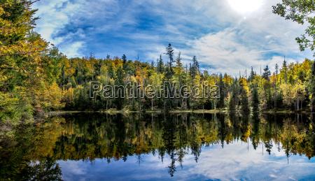 foresta bavarese baviera germania