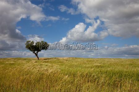agricoltura campo portogallo fattoria paesistico coltivare