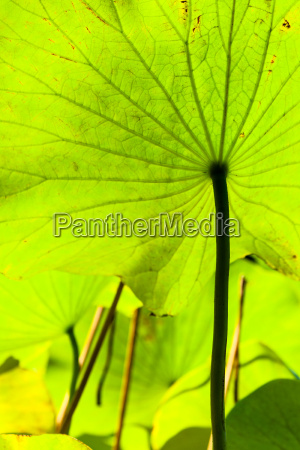 foglia enorme fiore pianta foglie luce