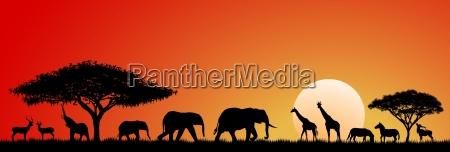 fauna selvaggio animali africano safari silhouette