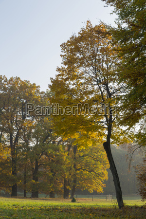 fall foliage park