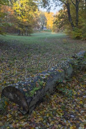 fallen tree trunk
