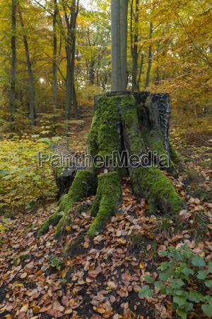 green tree stump