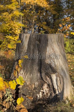 tree stump in the sun