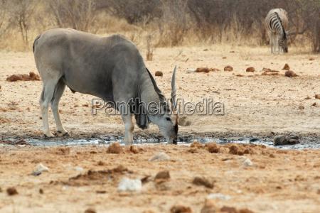 africa namibia natura safari
